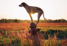 美国摄影师Theron Humphrey拍摄的狗狗创意照片-艺米网