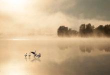 野生动物摄影师Andre Villeneuve作品欣赏-艺米网