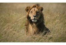 这么美的动物照片你看到过吗?-艺米网